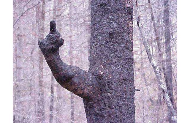 thumbuptree